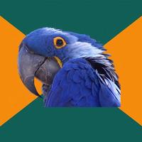 Попугай параноик (paranoid parrot) шаблон мемгенератора
