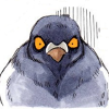 голубь Геннадий