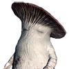 Mushroom Parent